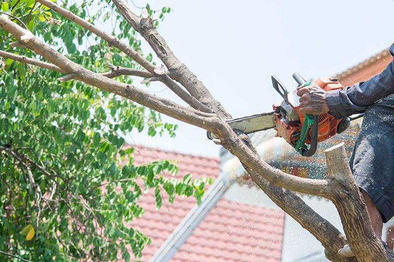 tree trimming service san diego